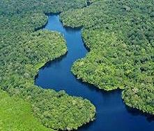 Vecteur santé s'engage dans la protection de la forêt amazonienne